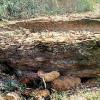 ஜவ்வாதுமலைப் பகுதியில் 3,000 ஆண்டுக்கு முந்தைய முதுமக்கள் தாழி கண்டுபிடிப்பு!