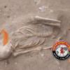 மன்னாரில் 32 ஆவது நாளாக தொடரும் மனித எலும்புக்கூடு அகழ்வு பணி!