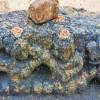திருச்சி அருகே பல்லவர் கால சிவன் கோயில் சிற்பம் கண்டுபிடிப்பு!