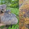 கிருஷ்ணகிரி அருகே 400 ஆண்டுகள் பழமை வாய்ந்த நடுகல் கண்டுபிடிப்பு!