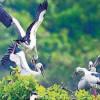 இனிமேல் பறவைகளை ரசிக்கலாம்: வேடந்தாங்கல் சரணாலயம் திறப்பு